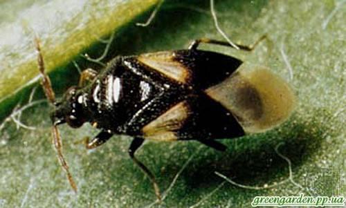 Виды насекомых в квартире