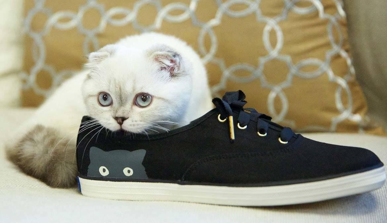 Передаются ли блохи от кошек к человеку