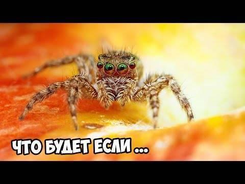 """Паутина – все приметы, связанные с паучьей сетью. блог """"магия биологии"""" почему осенью в воздухе много паутины"""