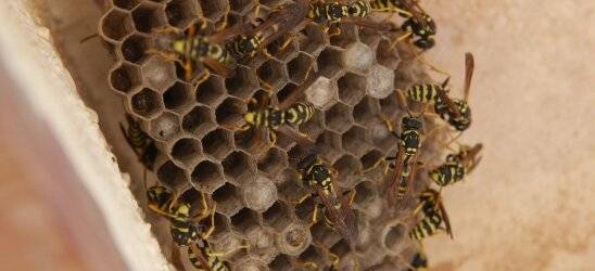 Фумигаторы от ос: отпугивание насекомых с участка и из дома