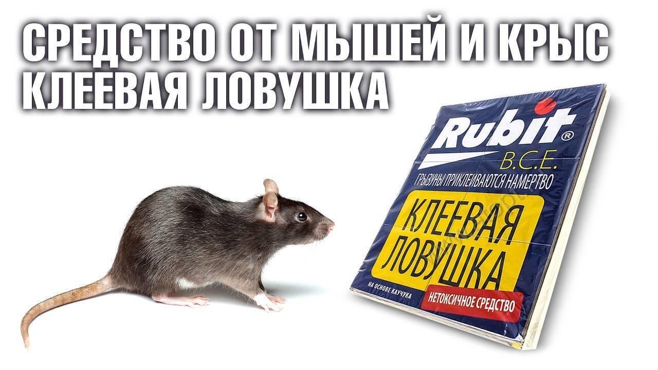 Какой запах отпугивает крыс и мышей