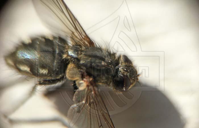 ?агита» — инструкция по применению средства от мух, ос и других насекомых