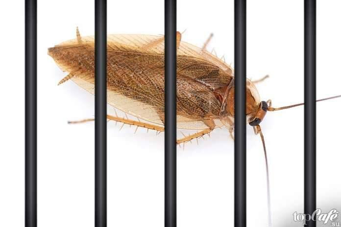 Комбат от тараканов — гели, спреи, ловушки