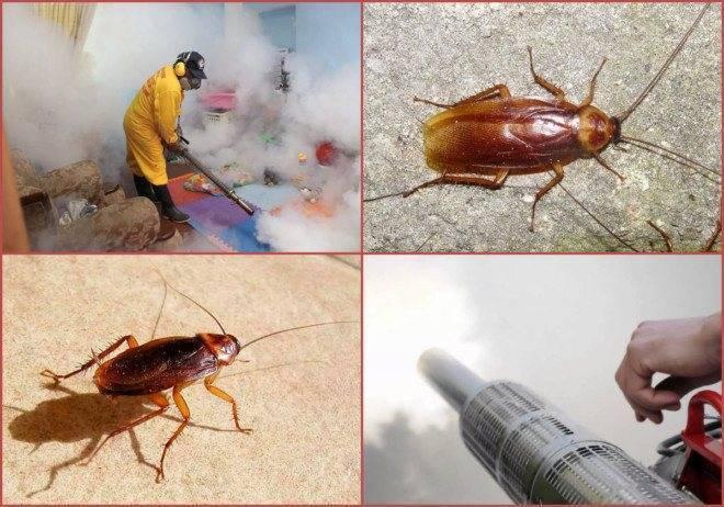 Как бороться с тараканами в общежитии