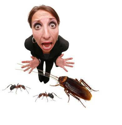 Как использовать лавровый лист против тараканов