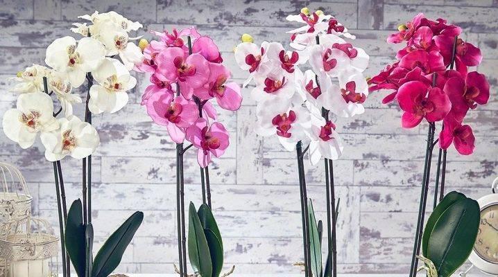 Самые распространённые вредители орхидей и способы борьбы с ними