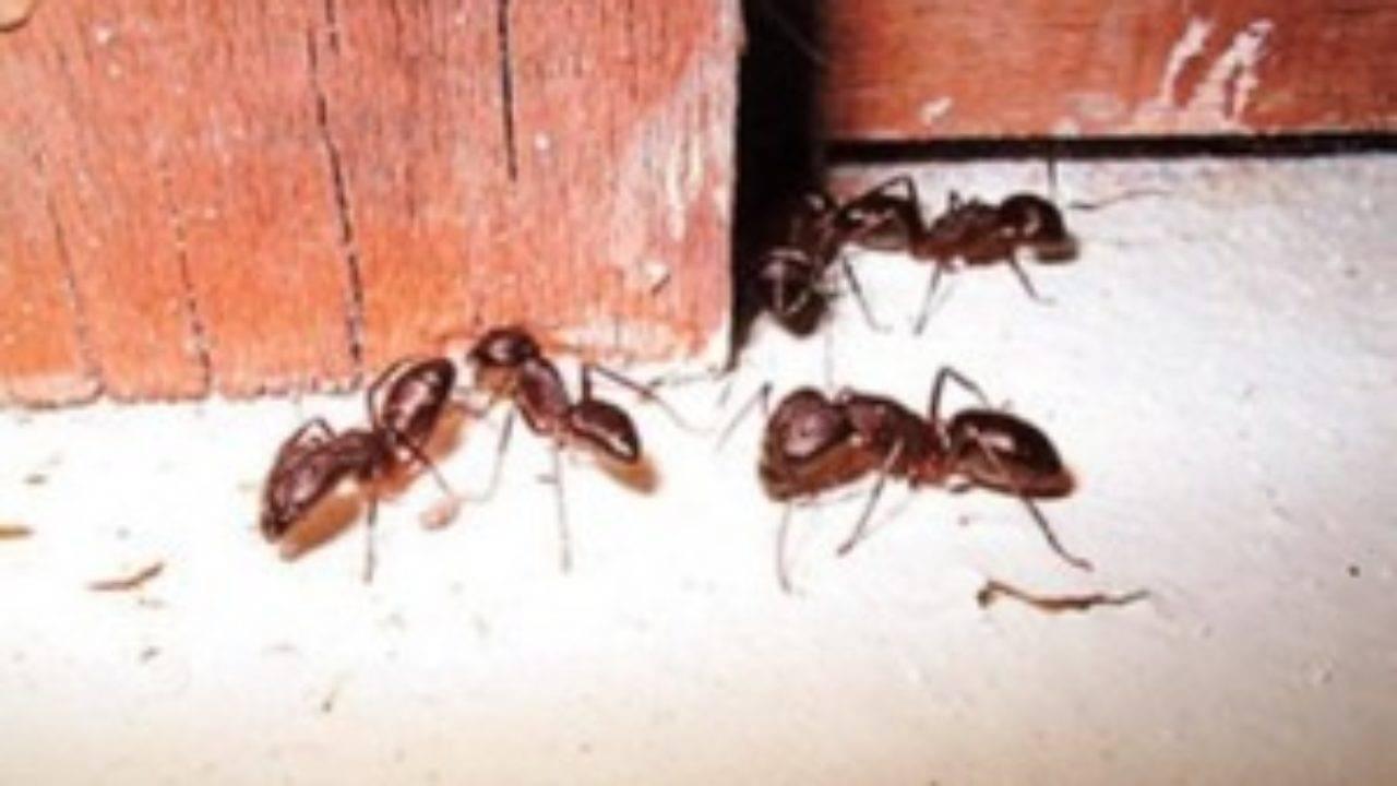 Средства от муравьев в доме на даче