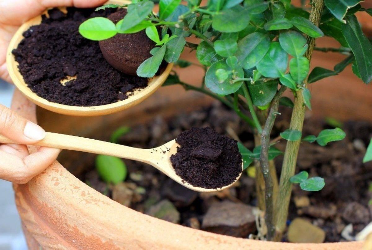 Как и чем обработать тлю на капусте