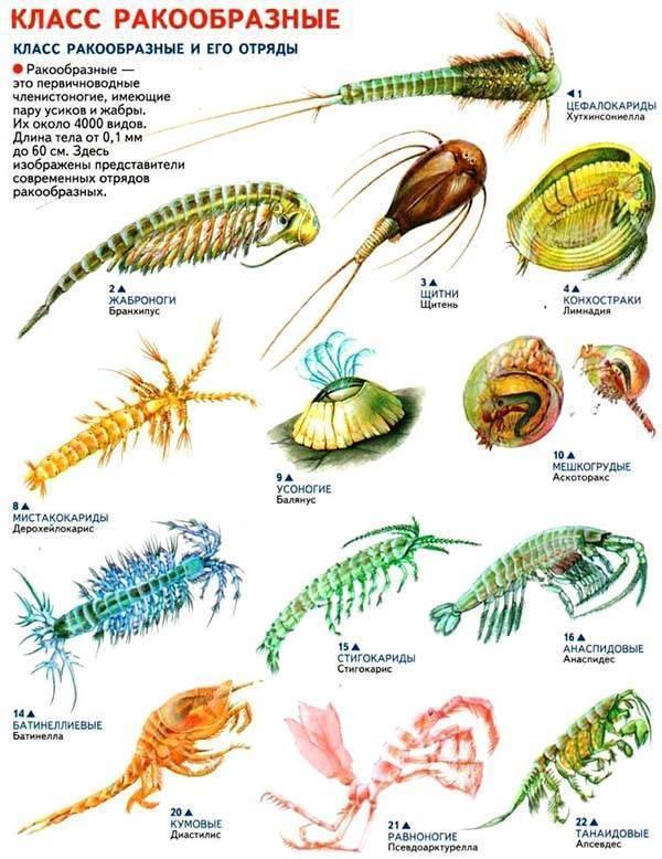 Топ-32 неприхотливых аквариумных растений