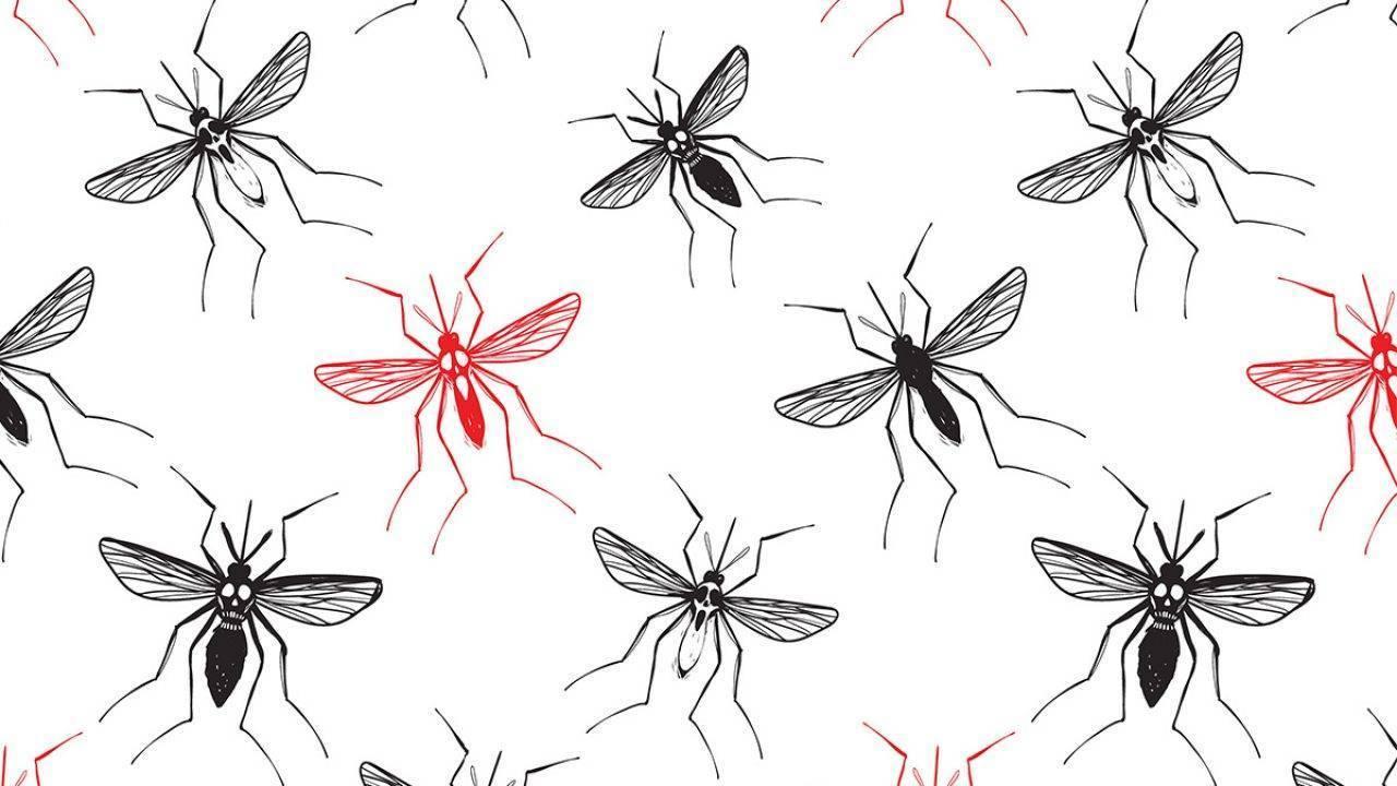 Чем опасны укусы мошек и как лечить места укуса