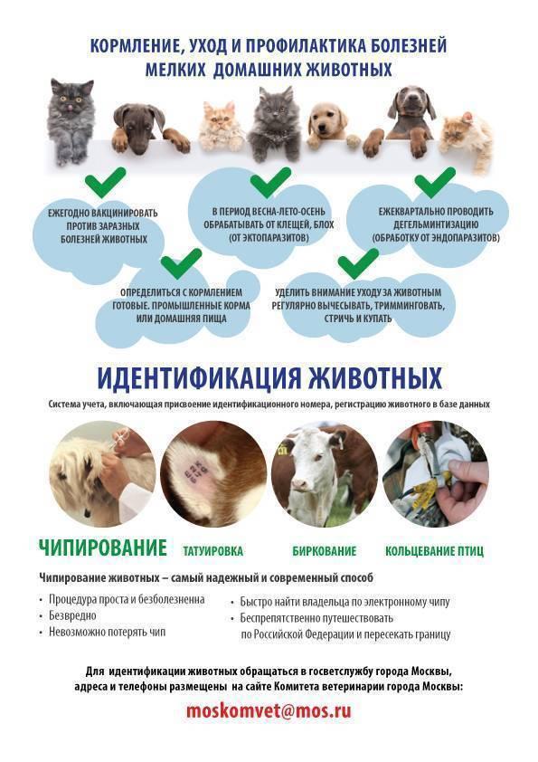 Когда, в каком возрасте и какие прививки нужно делать собакам?
