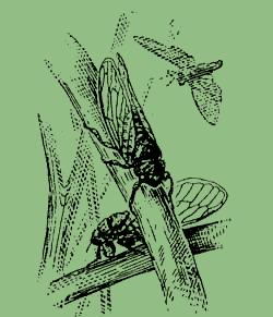 Интересно детям про насекомых