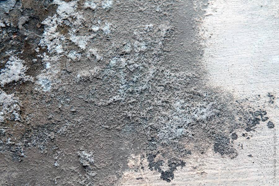 7 отличных способов избавиться от плесени в подвальных помещениях