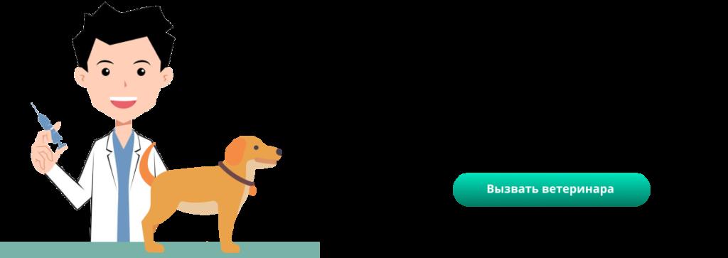 Собаку укусил клещ. пироплазмоз (бабезиоз) у собак. симптомы, лечение, профилактика. первая помощь – ветеринар на дому