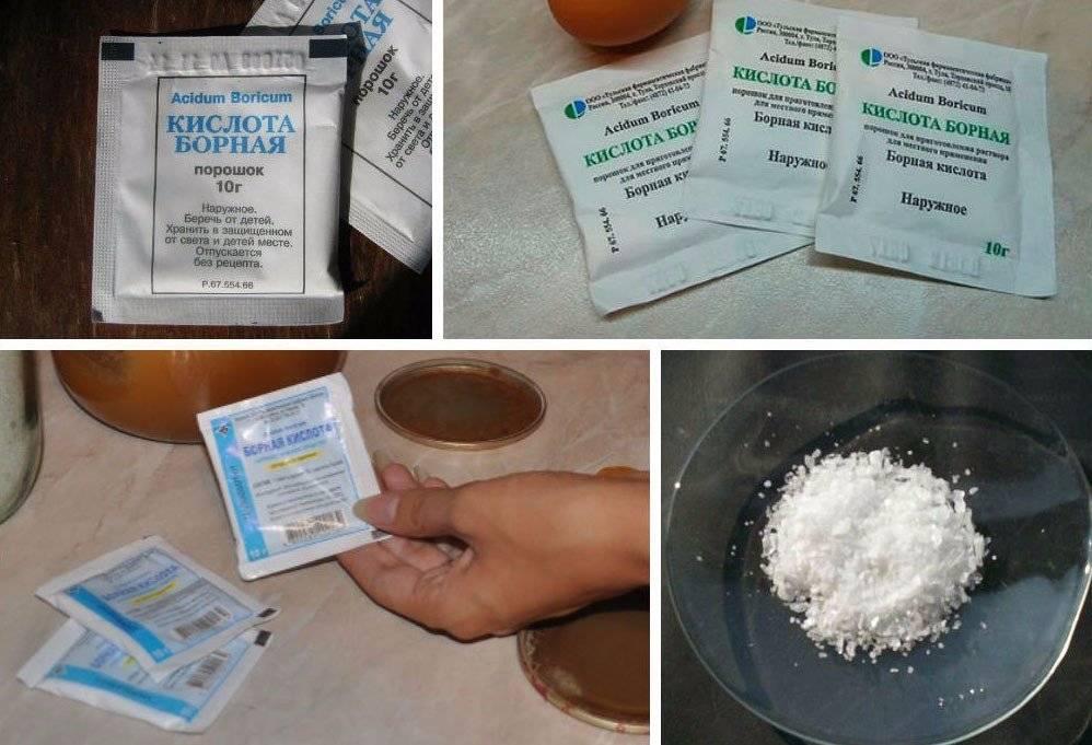 25 народных и химических средств для борьбы с тлей на смородине