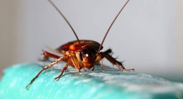 Тараканы в общежитии: как избавиться от надоедливых соседей