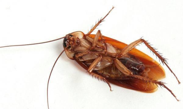 К чему снятся живые тараканы во сне