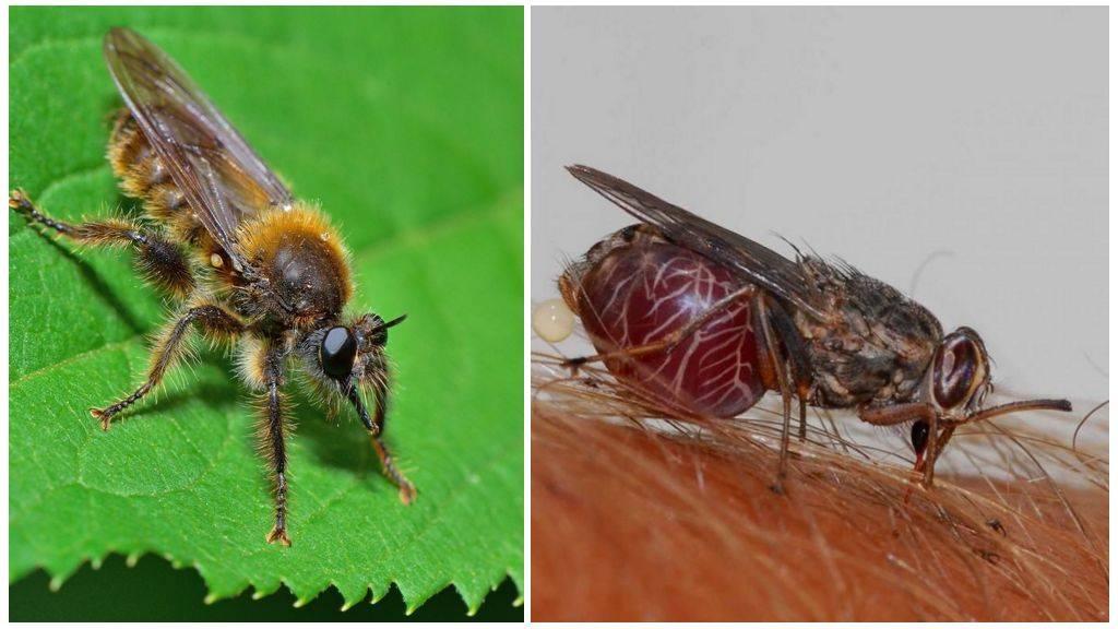 Особенности медоносной пчелы: строение, характеристики, содержание и польза пчелы