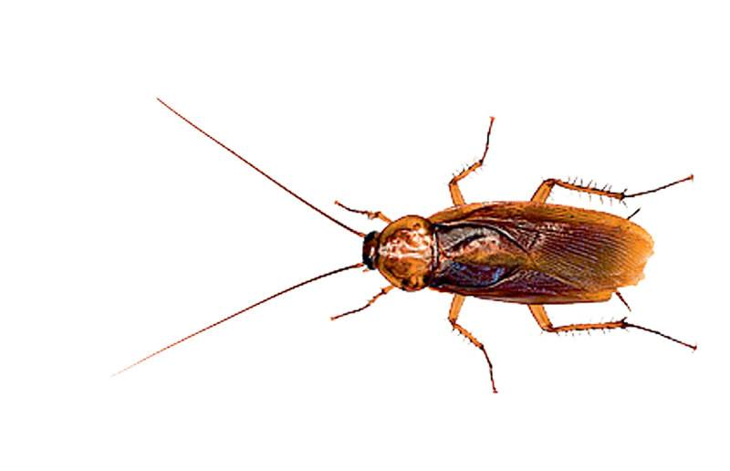 Откуда берутся тараканы в квартире и как от них избавиться?