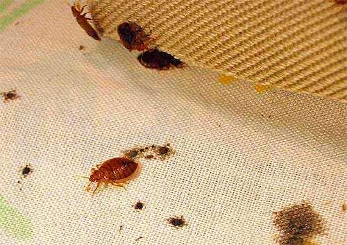Как избавиться от рыжих и черных домашних тараканов в квартире раз и навсегда: заговоры, молитвы, обряды, ритуалы. обряд на вывод тараканов на убывающую луну, молитва от тараканов и клопов трифону