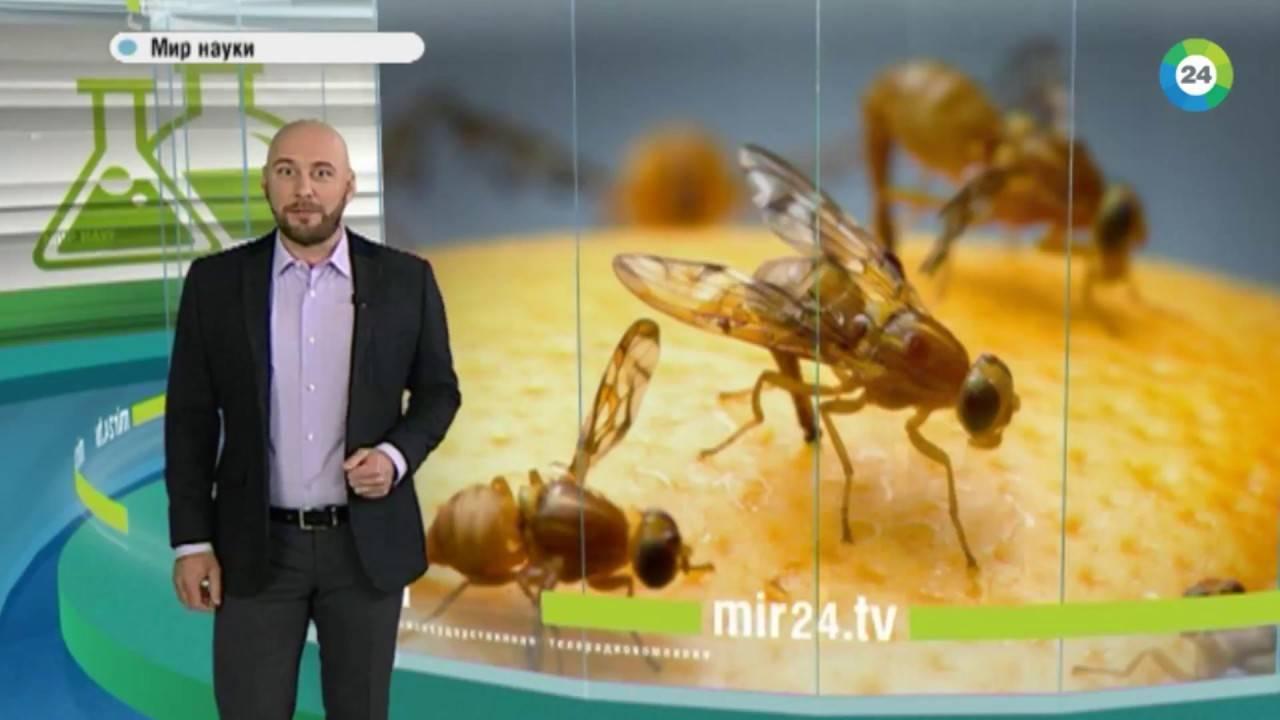 Для чего в природе комары. зачем нужны комары? какую пользу приносят комары