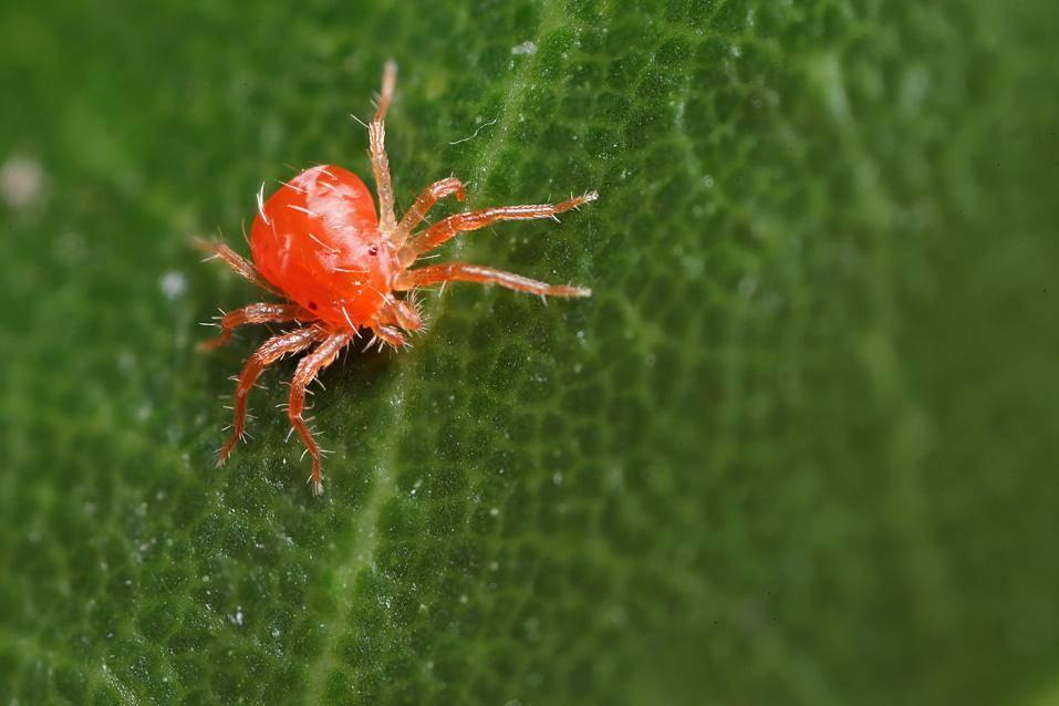 Как навсегда избавиться от паутинного клеща на комнатных растениях