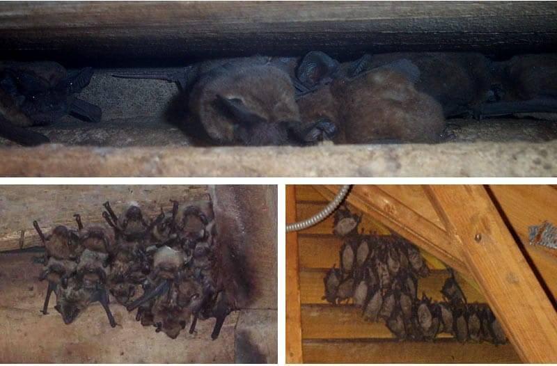 О чем предупреждает летучая мышь, попавшая в дом