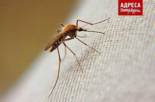 Как видят комары и что их привлекает к человеку. на что летят комары и как от них «спрятаться»? 3 как нас в темноте находят комары