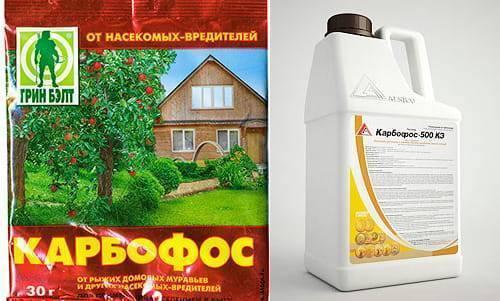 Карбофос (от вредителей огорода, клопов, тараканов, муравьев): свойства и правильное применение