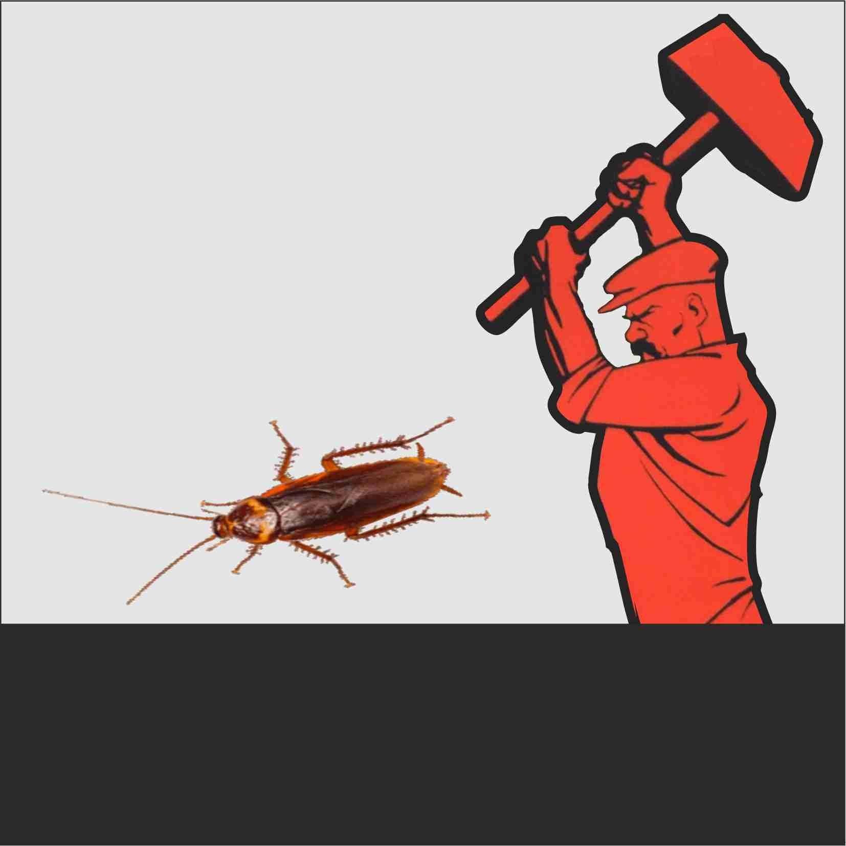 Тараканы в общежитии: как избавиться