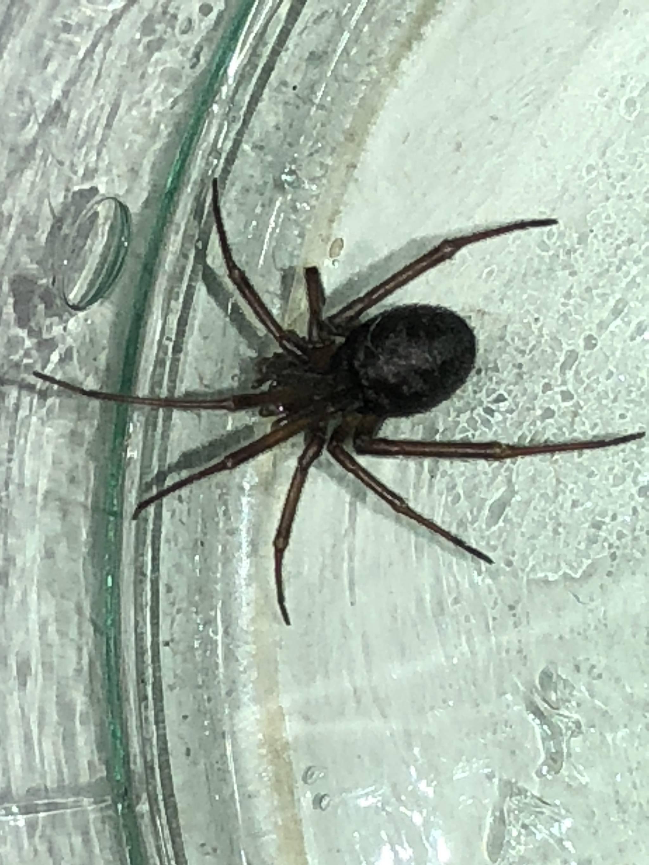 Самые странные, уродливые и ужасные насекомые (пауки) мира. самые страшные пауки – вся правда об арахнидах