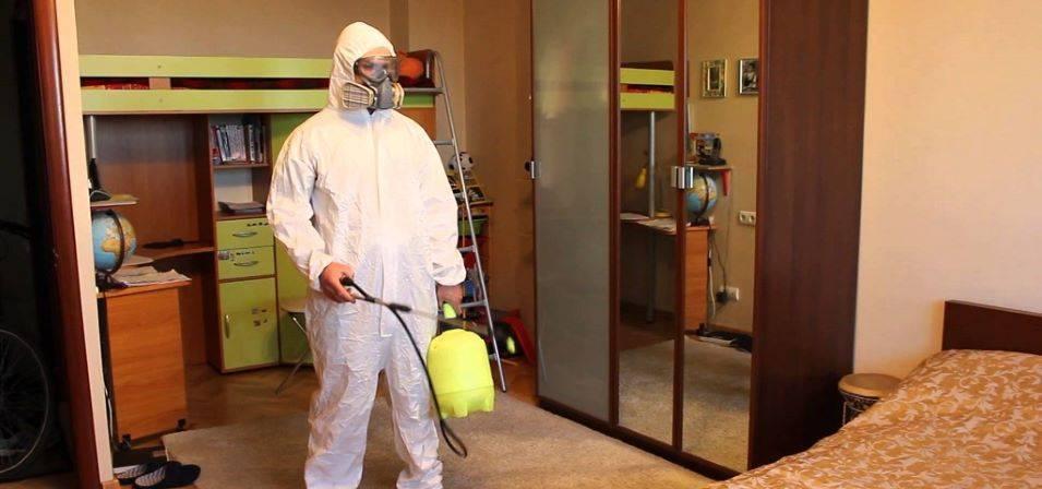 Маленькое насекомое ― большая проблема. как избавиться от блох в квартире?
