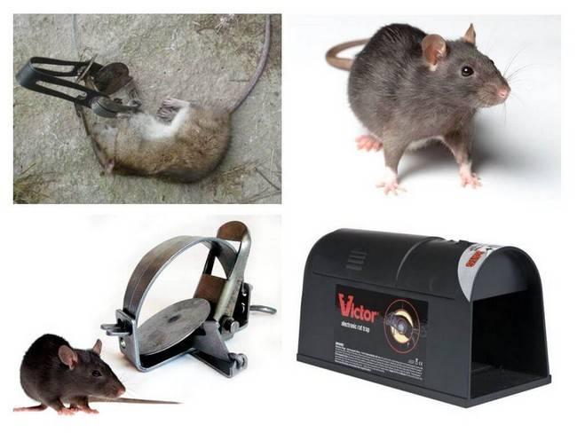 Правильно заряжаем и устанавливаем ловушку для мышей