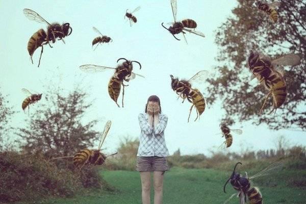 Чем отпугивают ос от себя. чего боятся осы: список отпугивающих средств и методов для использования в саду и жилом доме