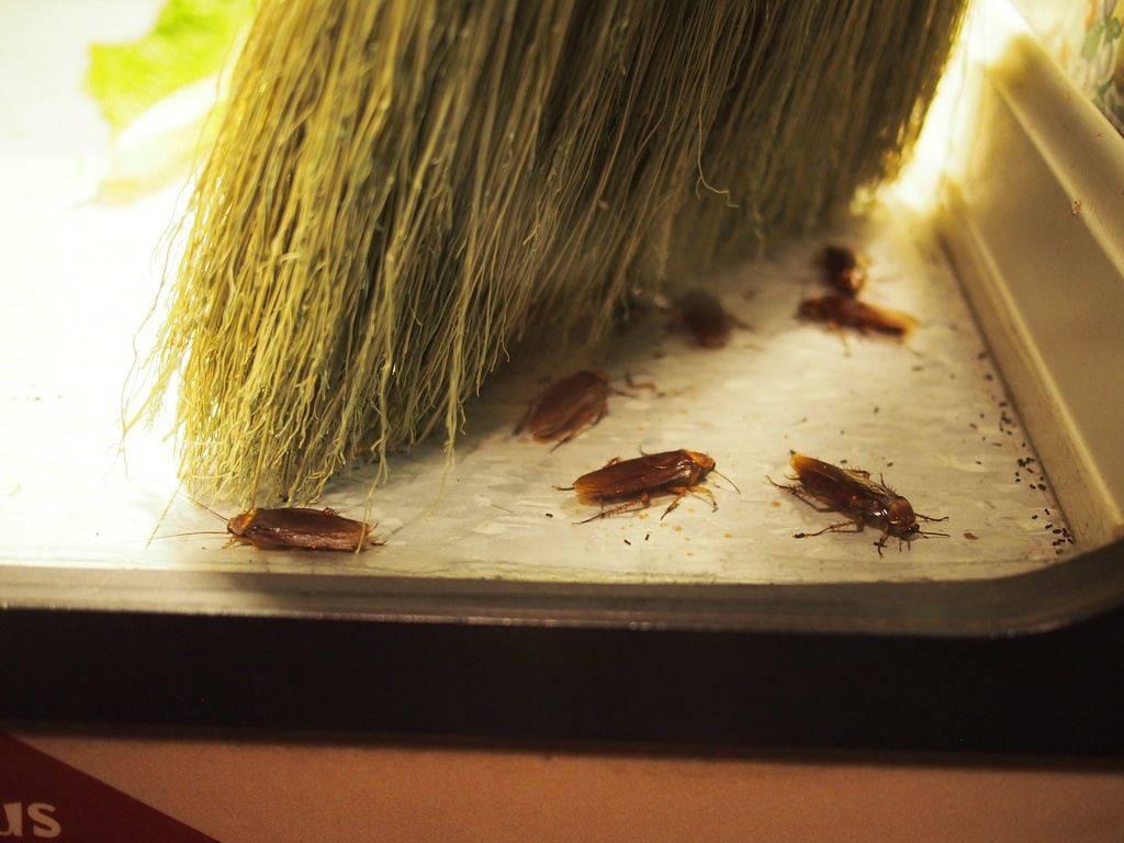 Какое из многочисленных средств от тараканов в квартире является самым эффективным