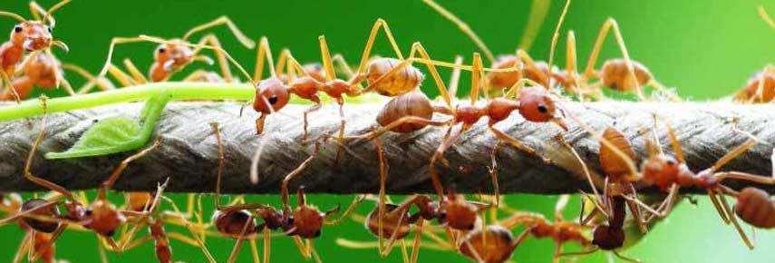 Как избавиться от муравьев в саду и огороде: подбор эффективных средств