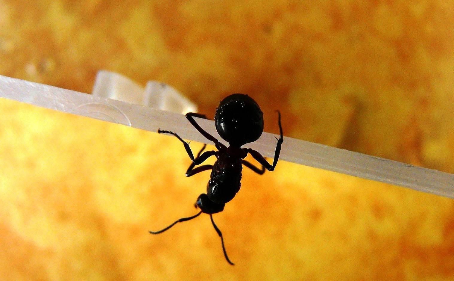 Как избавиться от муравьёв: самые эффективные средства