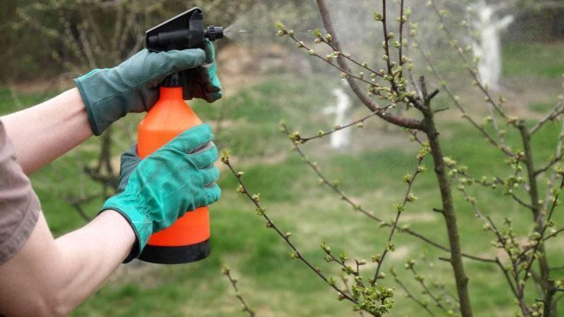 Как бороться с тлёй на яблоне