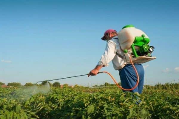 Как правильно разводить средство от колорадского жука апачи?