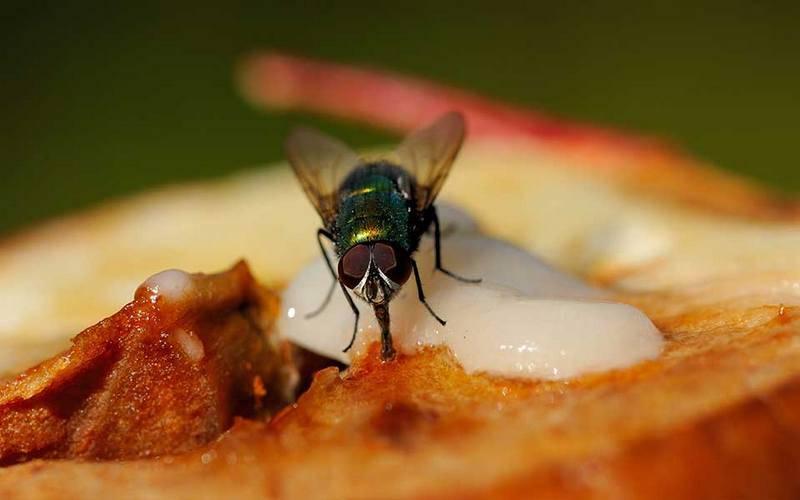 Для чего мухи потирают лапками?