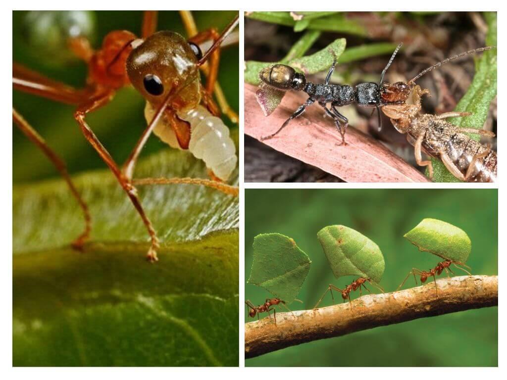 Как избавиться от муравьёв в теплице без вреда для растений