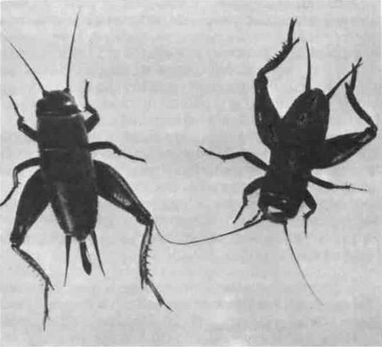 Клещи красного цвета – фото, описание, где обитают и причиняют ли вред. методы борьбы с насекомыми