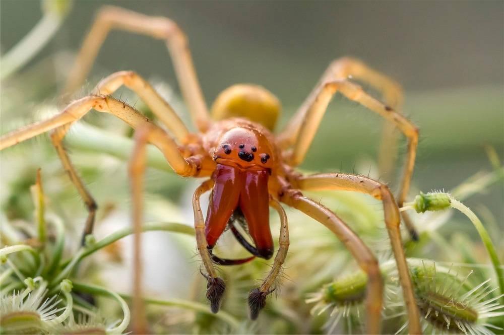 Паук с желто черными полосками. паук-оса – ядовитое насекомое с яркой внешностью. пауки прыгуны – salticidae