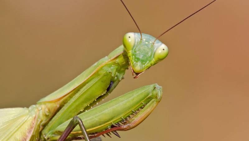 Почему самки съедают самцов во время или после спаривания?
