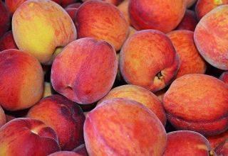 Лучшие средства для борьбы с тлей на персике