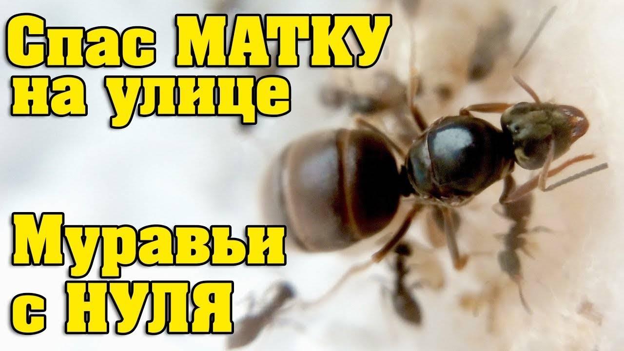 Главные вопросы о муравьиной матке: раскрываем все карты