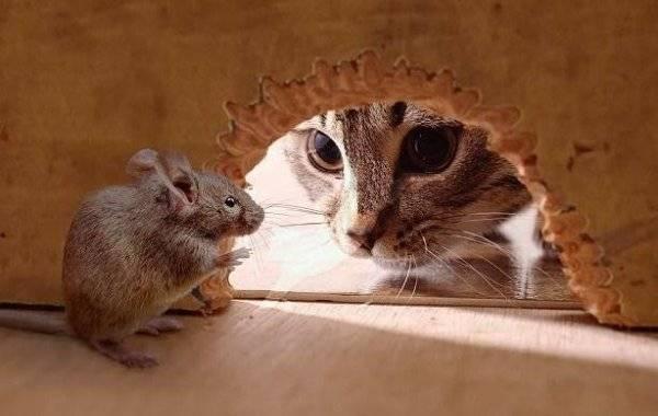 Выбираем лучший отпугиватель крыс и мышей: обзор приборов и устройств (тайфун, электрокот, град), цена, отзывы