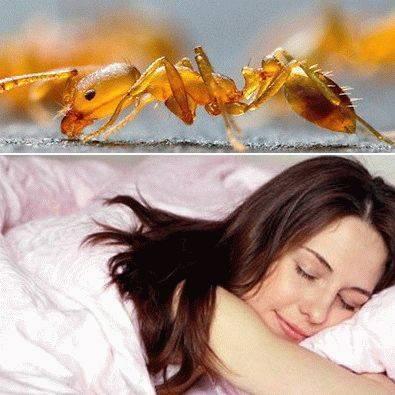 О чем говорят приснившиеся муравьи?