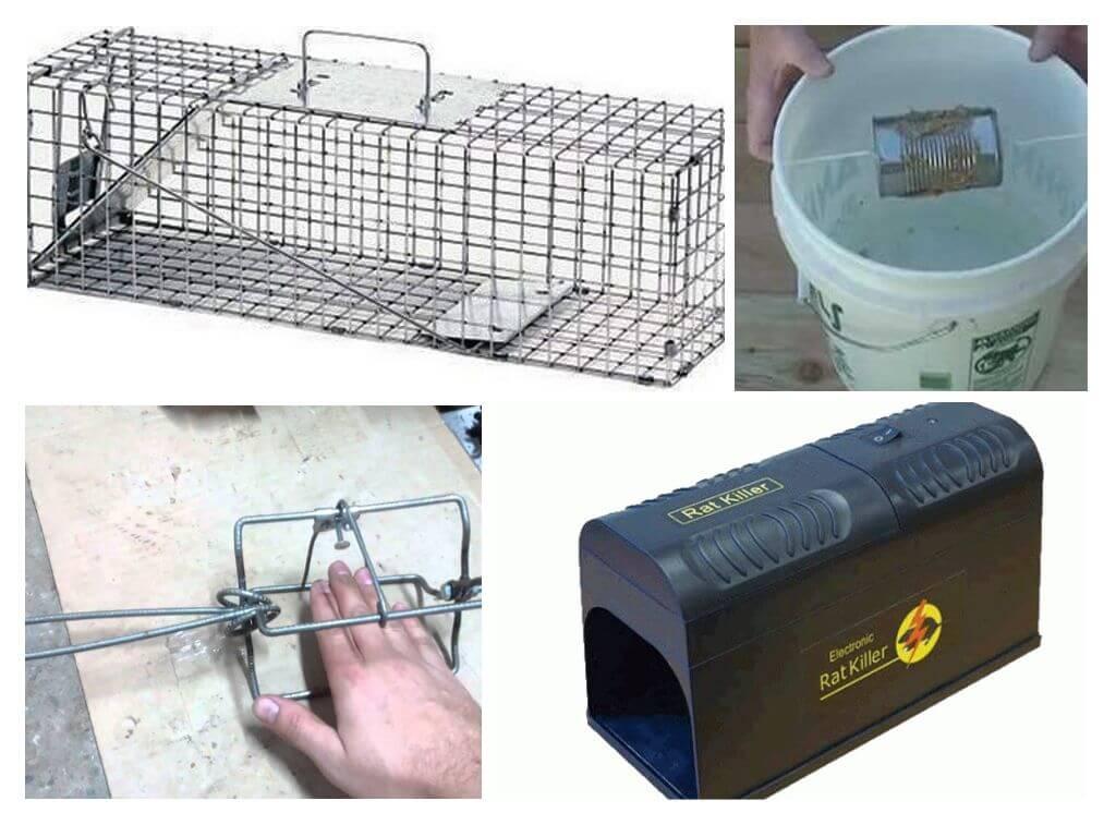 Своими руками крысоловку в домашних условиях как сделать?