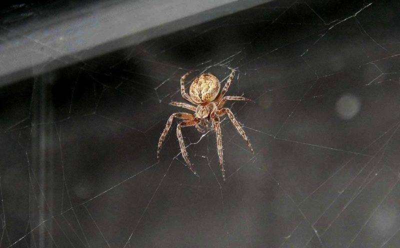 Примета: паук спустился вниз с потолка перед лицом